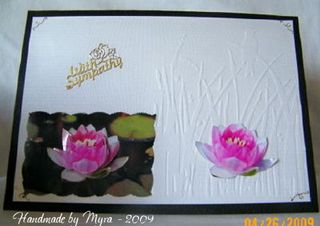 Myra waterlily_sympathy