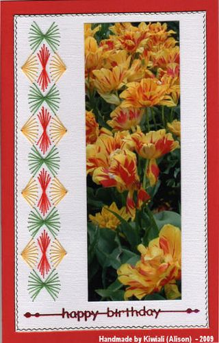 Kiwiali yellow&red tulips