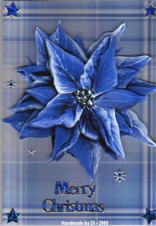 Di%20xmas%20blue%20poinsettia%20'09[1]
