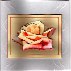 Di_another_beautiful_rose_picture