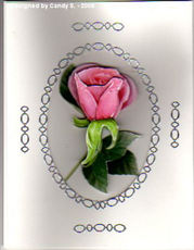 Candy_s_pink_rose