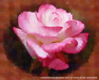 A_painted_rose